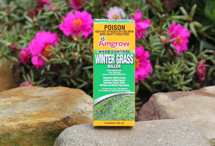 Lawn Weed | Winter Grass Treatment