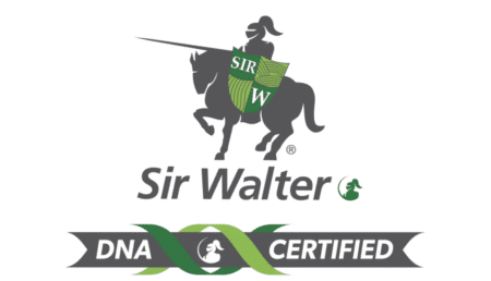 Sir Walter DNA Certified