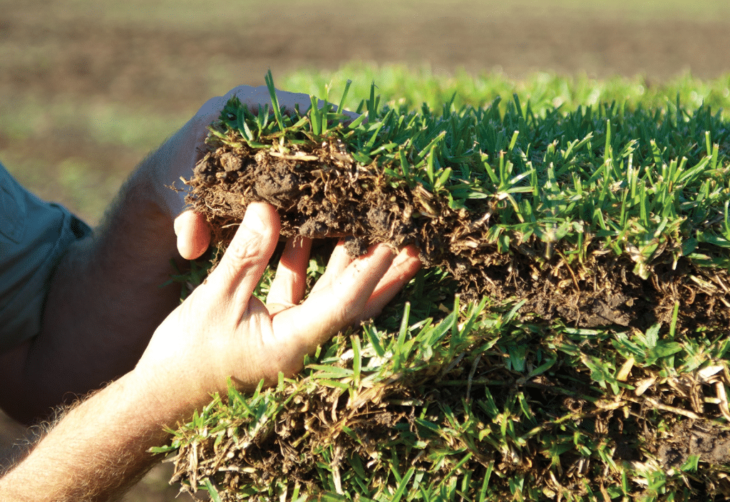 All our lawn varieties are carefully selected and bred for genetic purity